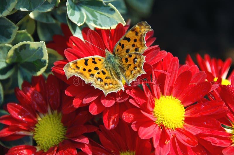 motyli kwiat obrazy stock