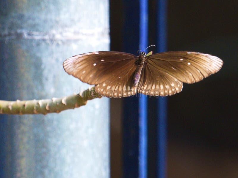 Motyli lądowanie na małym kwiatu pączku obrazy royalty free