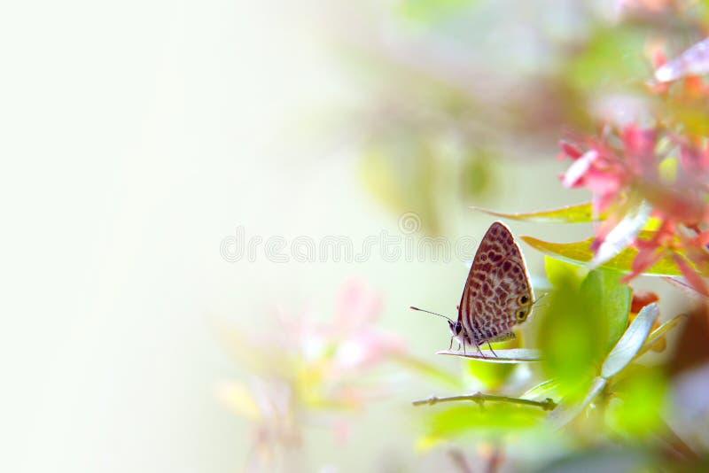 motyli liść obraz royalty free