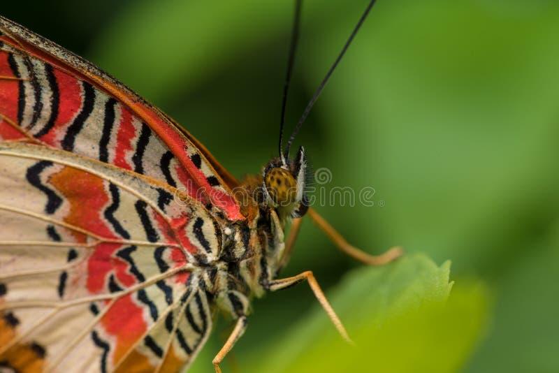Motyli obsiadanie na liściu obrazy royalty free
