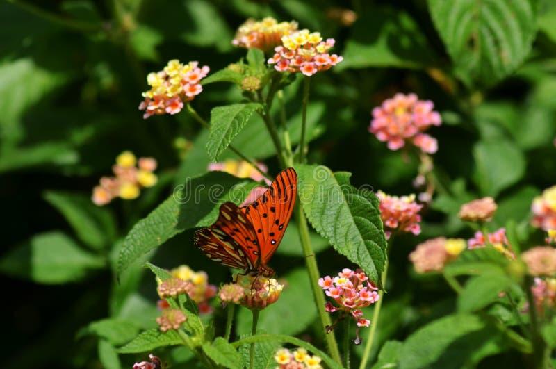 Motyli odpoczywać i karmienie obraz stock