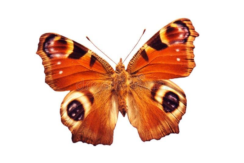 motyli paw obrazy royalty free