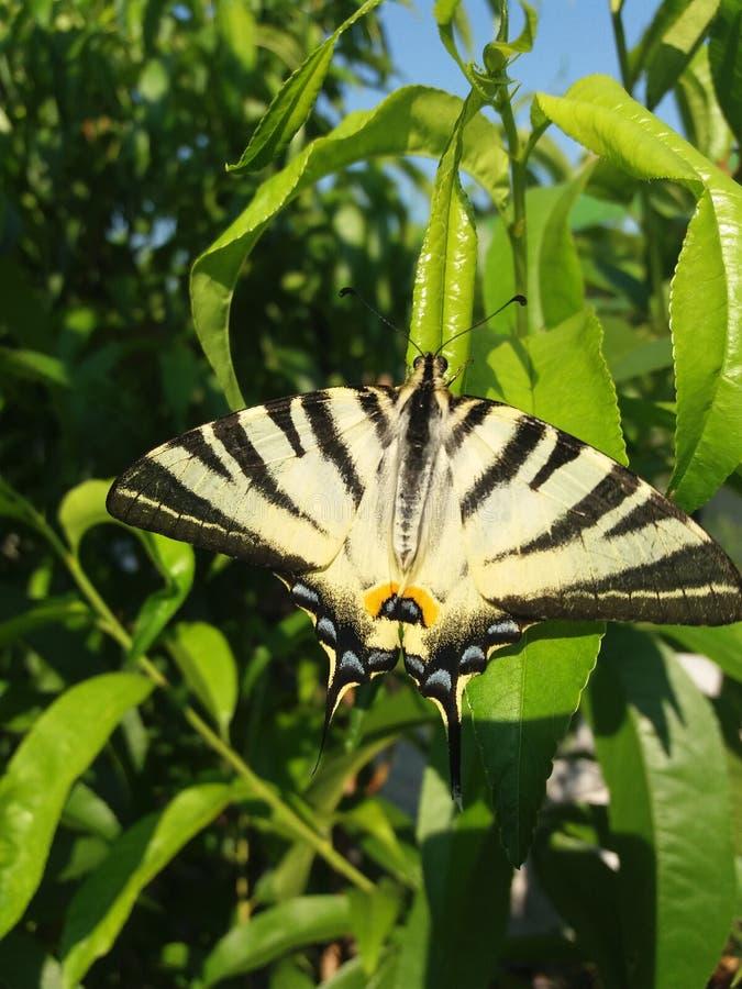 Motyli skutek obrazy stock
