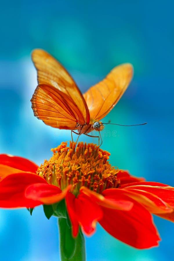 motylia pomarańcze zdjęcia royalty free