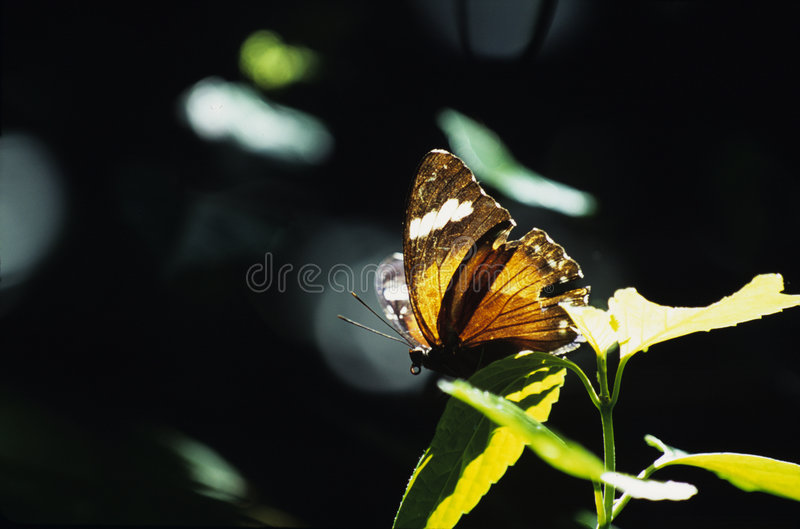 Download Motylia pomarańcze zdjęcie stock. Obraz złożonej z lotnictwa - 49070