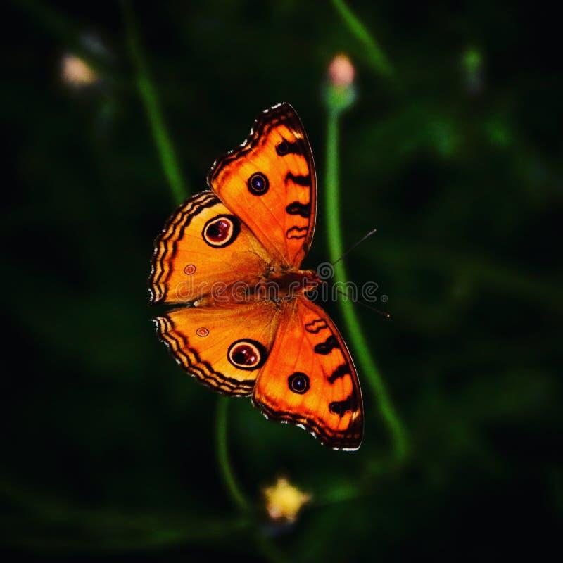 Motylia porada obraz stock