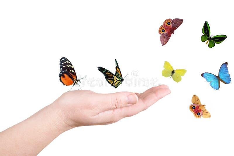 motylia ręka zdjęcia royalty free
