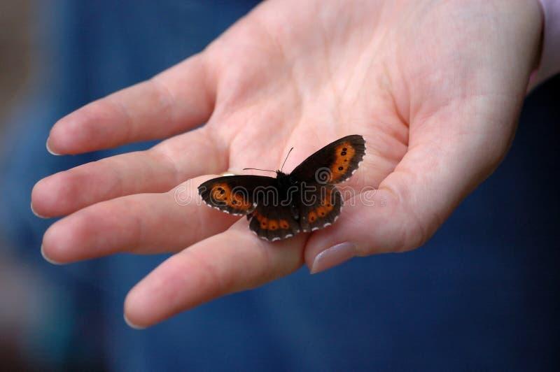 motylia ręka obraz stock