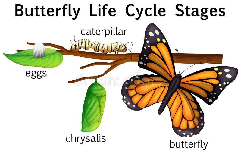 Motylie etap życia sceny royalty ilustracja