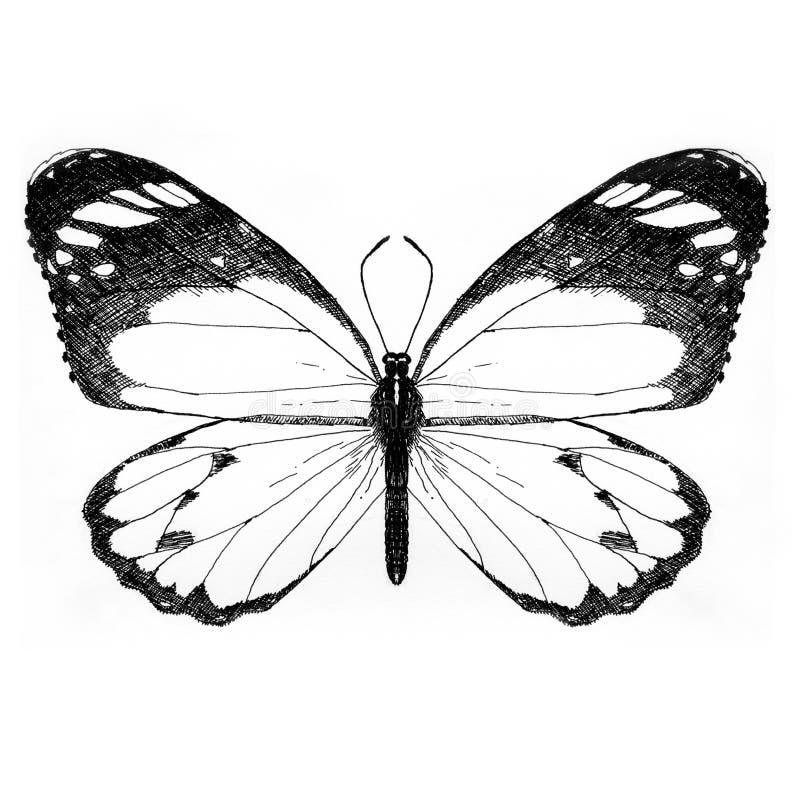 motylie ilustracji malować rąk zdjęcie stock