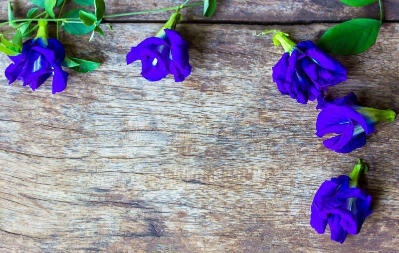 Motyliego grochu kwiat na starym drewnianym tle, kopii przestrzeń obraz stock