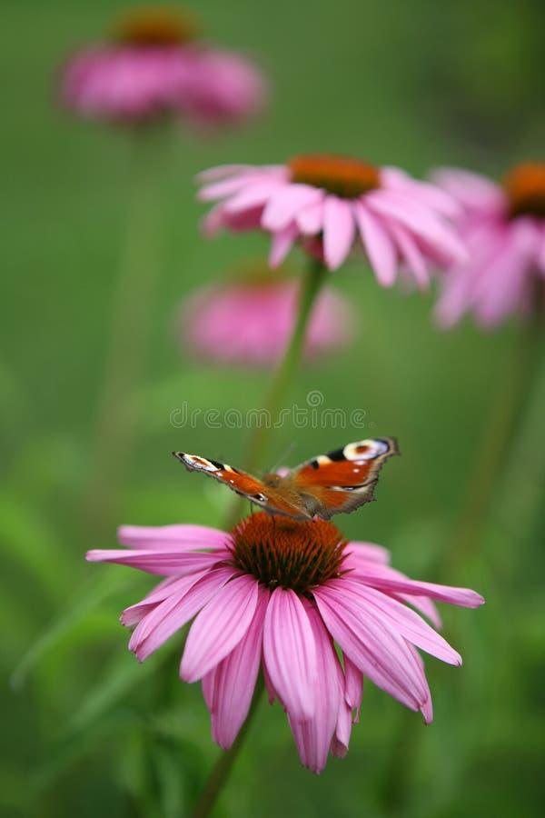 motyliego kwiatu lato fotografia stock