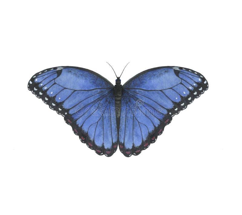 Motyliej akwareli morfo insektów zwierząt zwrotnika dżungli ilustracyjny błękit ilustracja wektor