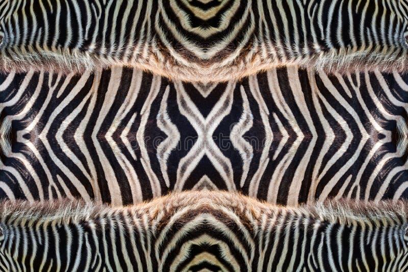 Motywy i wzory zebry skóra obrazy royalty free