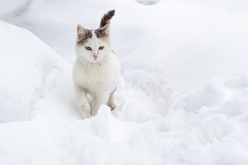 Mouchards légers de chat par la neige dans une congère image stock