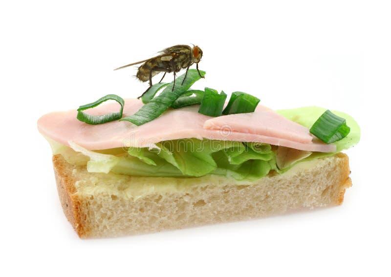 Mouche à la maison se reposant sur le sandwich au jambon délicieux images libres de droits