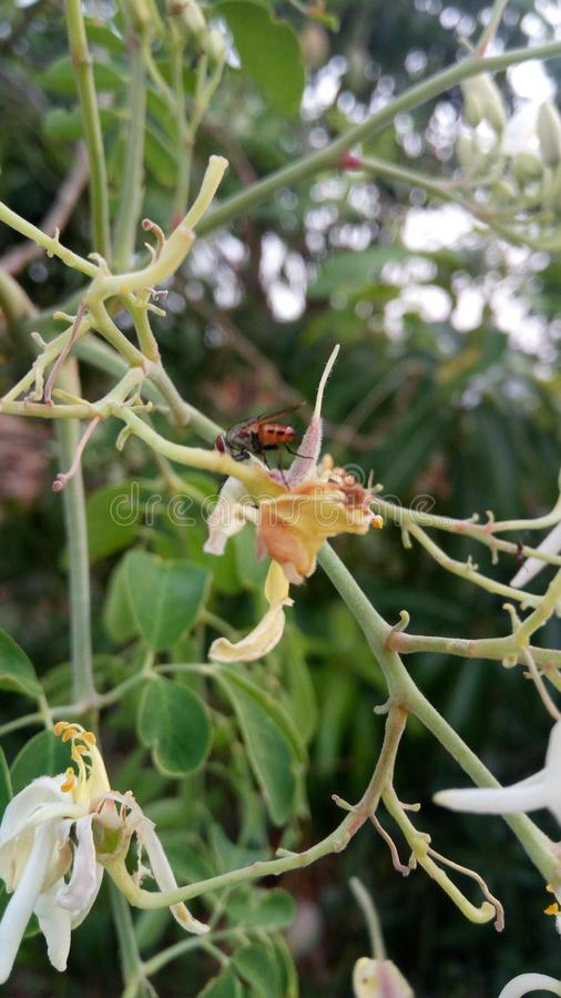 mouche images stock