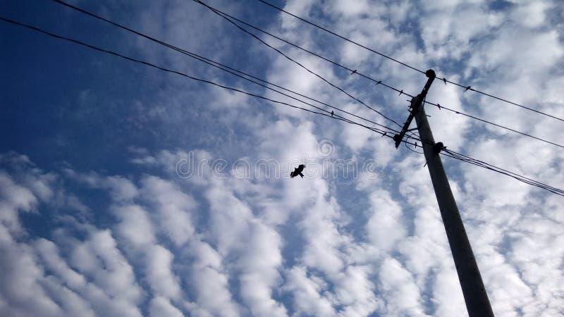 Mouche d'oiseau de Chil dans le ciel photos stock