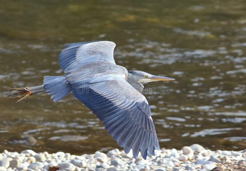Mouche dans de grandes ailes image stock