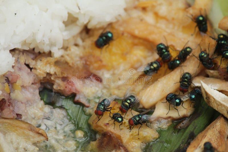 Mouche de Chambre, concept d'hygiène de contamination des aliments photo libre de droits