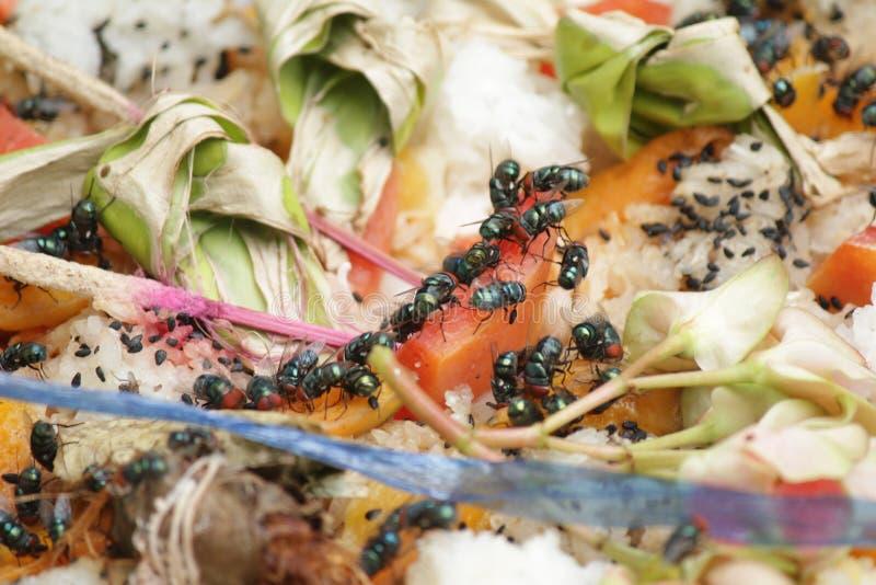 Mouche de Chambre, concept d'hygiène de contamination des aliments photos libres de droits