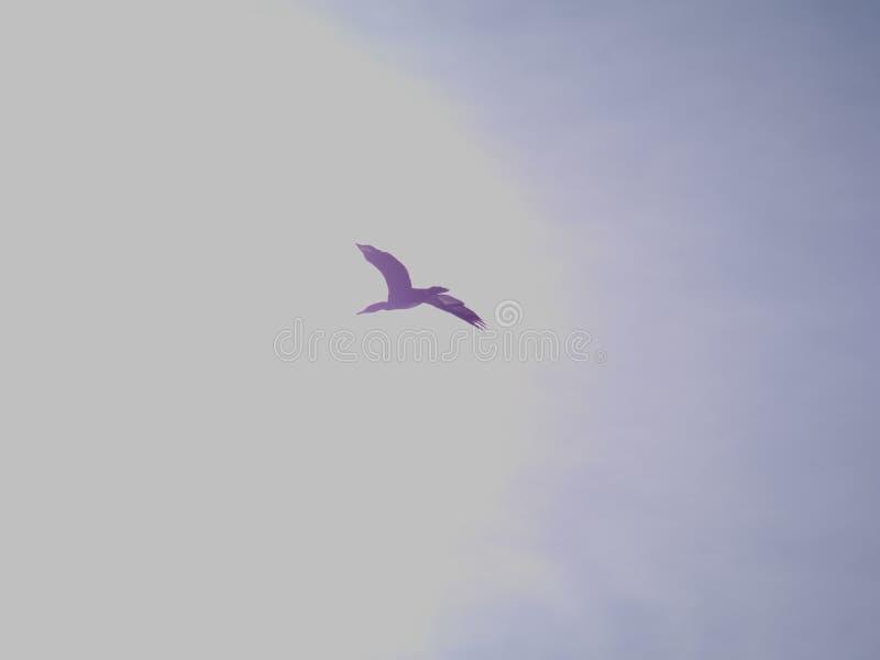 Mouche de Cormorant à l'infini image stock
