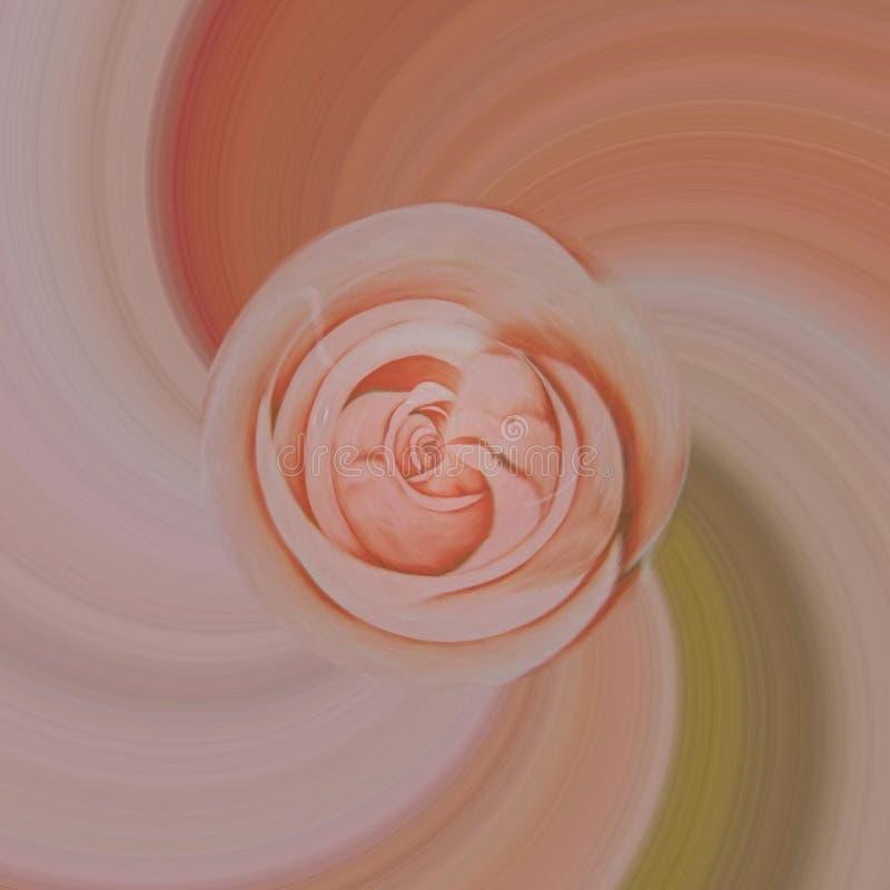 Mouche de fleur en cercle photographie stock libre de droits