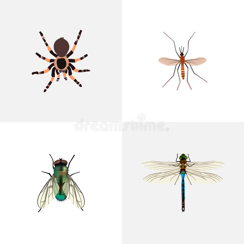 Mouche domestique réaliste, moucheron, Damselfly et d'autres éléments de vecteur L'ensemble de symboles réalistes d'insecte inclu image stock
