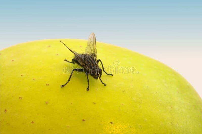 mouche et fruit image stock image du mouche t te g ner 1972843. Black Bedroom Furniture Sets. Home Design Ideas