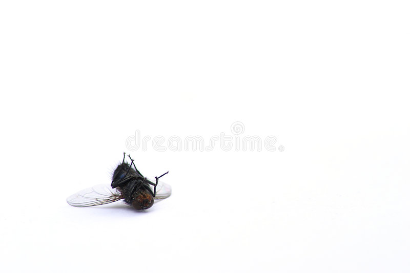 Mouche morte photographie stock