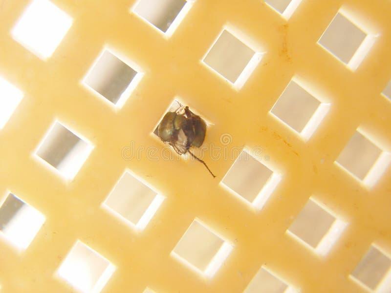 Mouche ronde dans une perforation rectangulaire photographie stock libre de droits