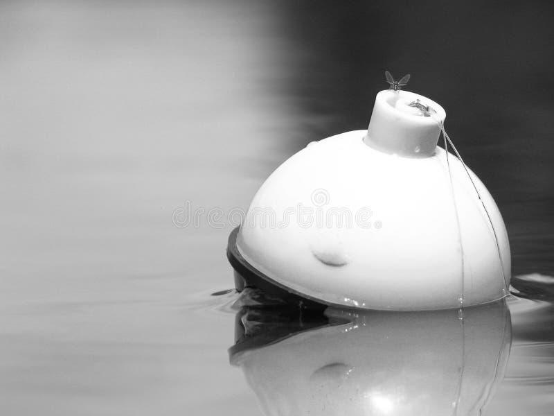 Mouche sur le bobber de pêche images libres de droits
