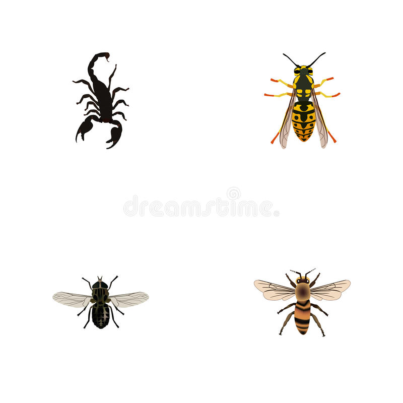 Moucheron réaliste, abeille, guêpe et d'autres éléments de vecteur L'ensemble de symboles réalistes d'insecte inclut également l' illustration de vecteur