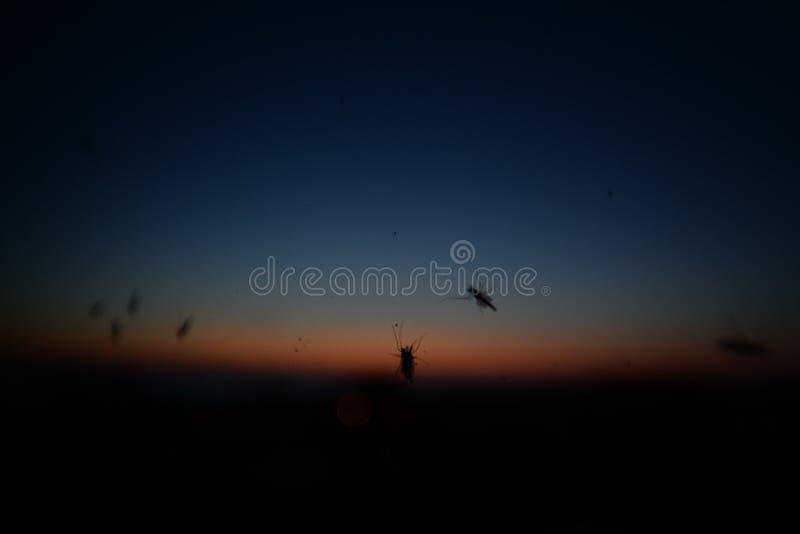 Moucherons sur une fenêtre pendant le coucher du soleil aux banques externes la Caroline du Nord photographie stock libre de droits