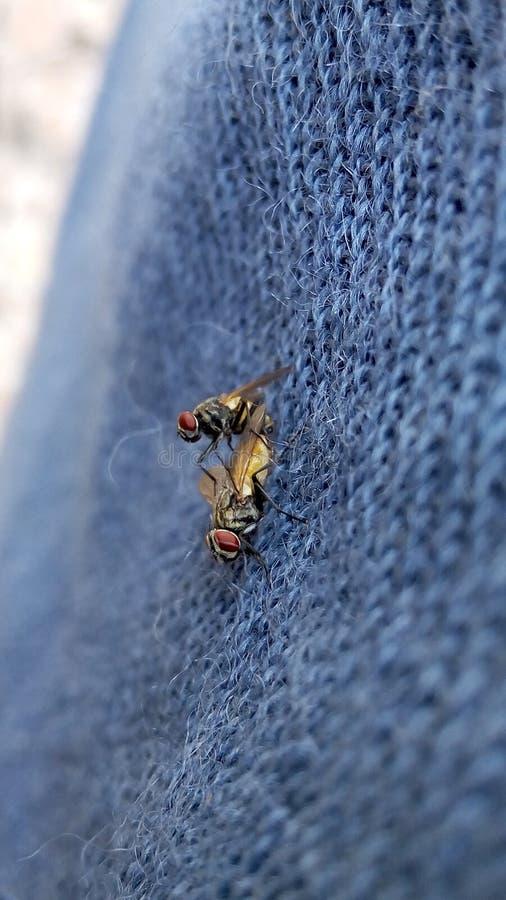 mouches photos libres de droits