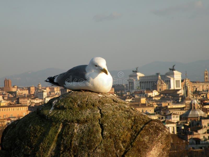 Mouette à Rome photographie stock libre de droits