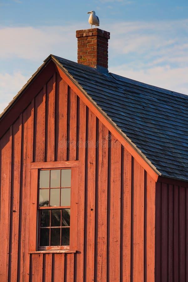 Mouette étée perché sur une cheminée de Shack de homard dans Rockport, le Massachusetts photo libre de droits