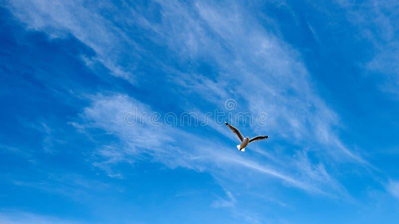 Mouette affichée noire montante dans le ciel photo stock