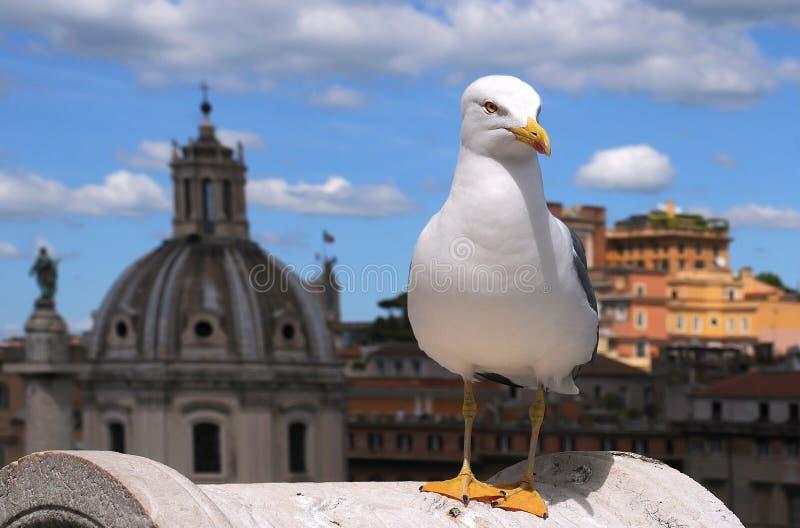Mouette au Capitole à Rome photographie stock