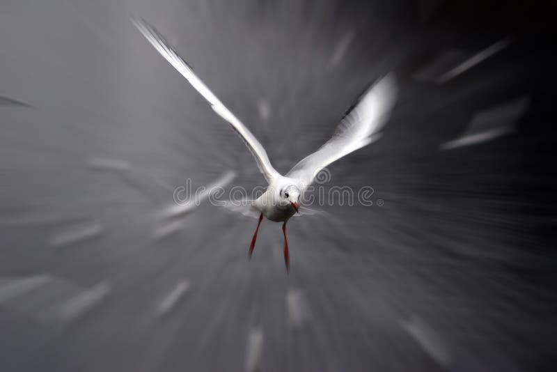 Mouette d'oiseau photo stock