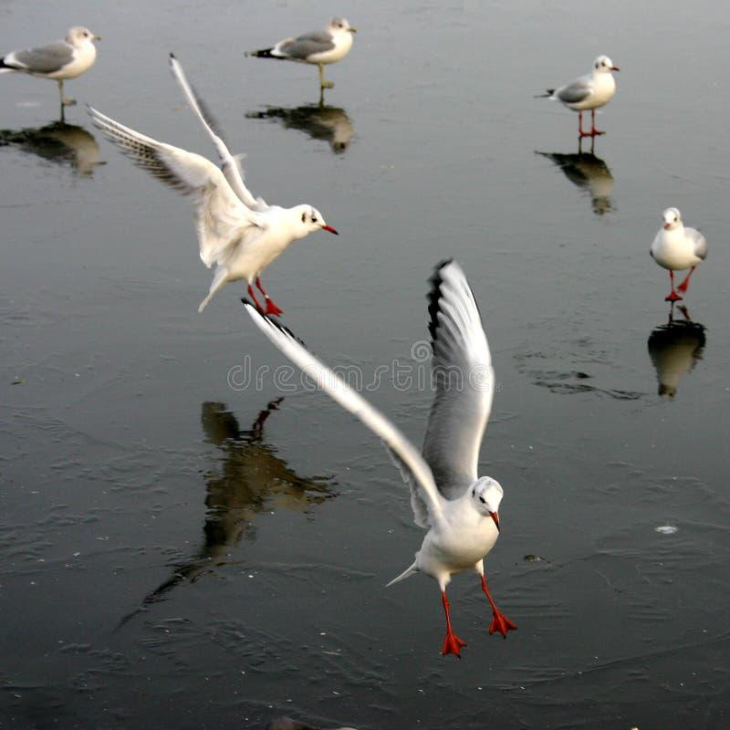 Download Mouette d'oiseau photo stock. Image du pays, denmark, ciel - 730310