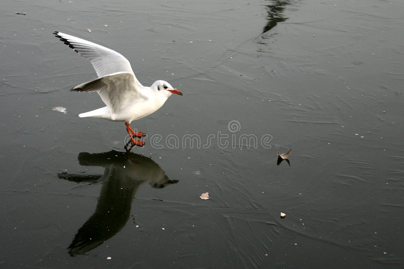 Download Mouette d'oiseau photo stock. Image du aile, pays, océan - 730332