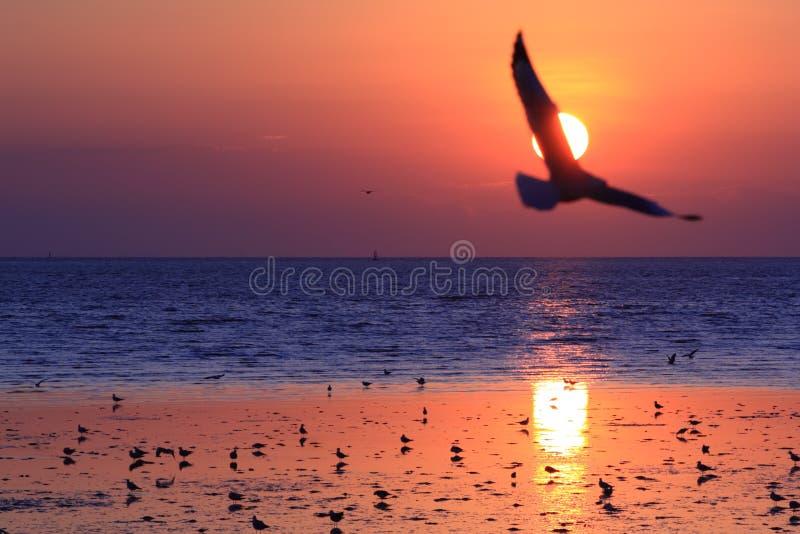 Mouette dans le coucher du soleil images stock