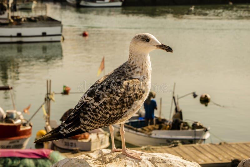 Mouette dans le port au Portugal image libre de droits