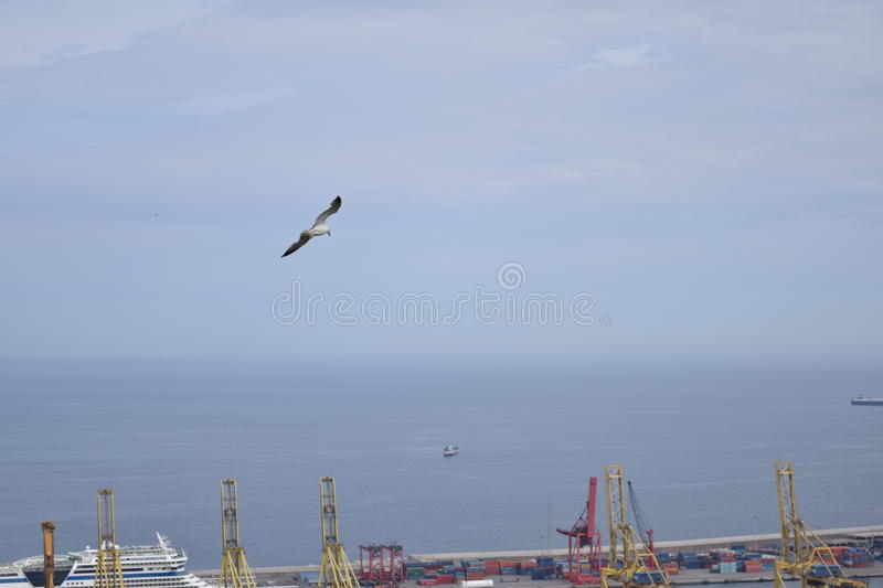 Mouette dans le port de Barcelone photo stock