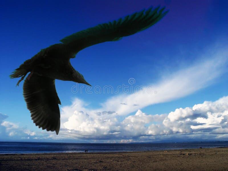 Download Mouette de mer photo stock. Image du solitude, oiseau, ciel - 90294