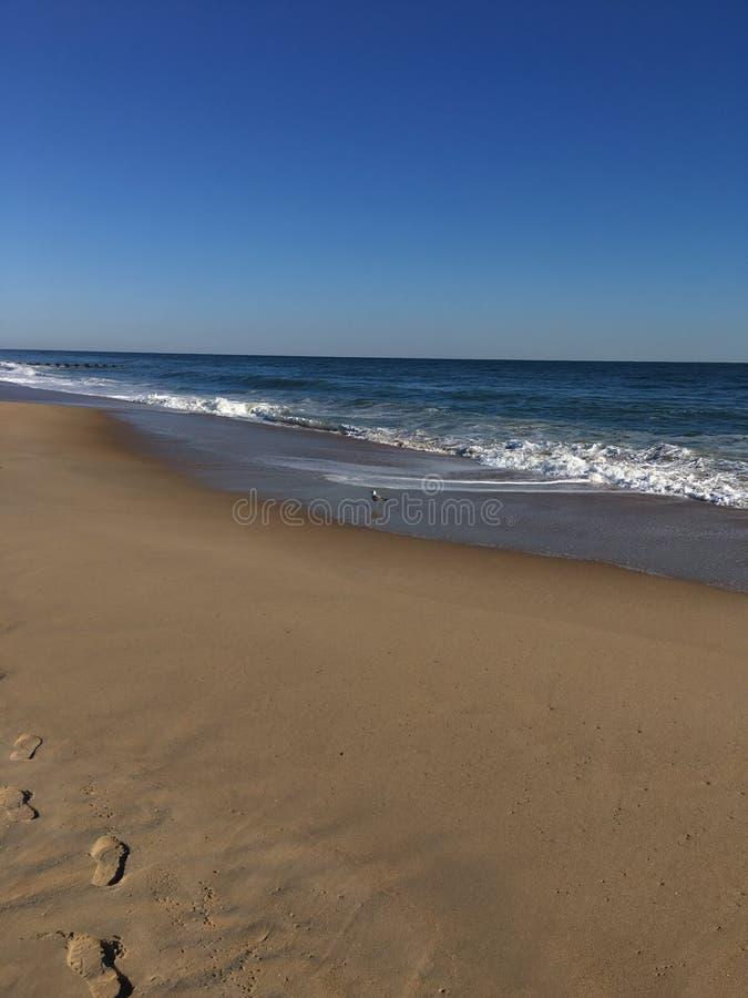 Mouette de plage photos stock