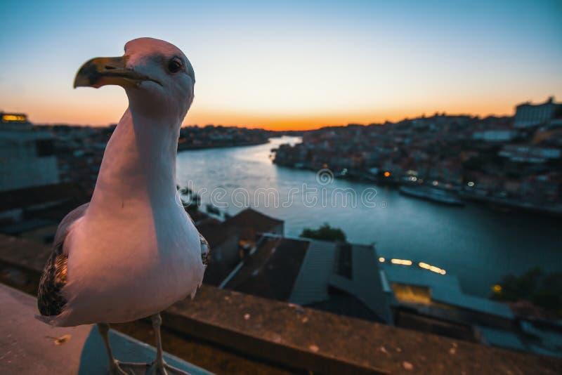 Mouette de plan rapproché se reposant sur le bord de mer de la rivière de Douro la nuit, Porto photo libre de droits