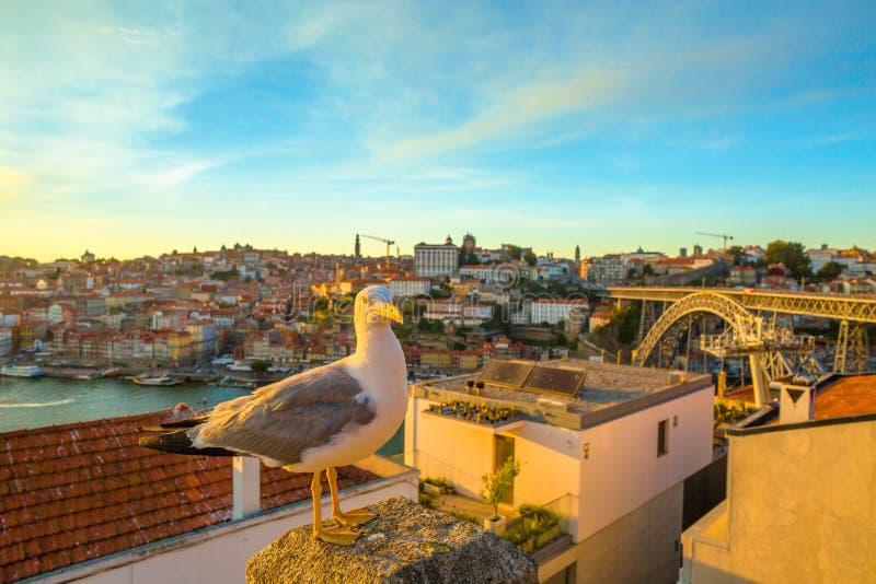 Mouette de rivière de Douro image stock