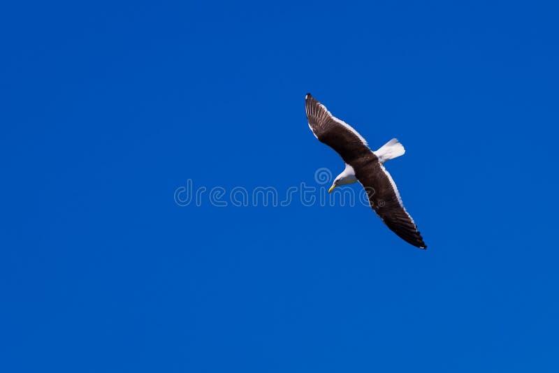 Mouette et ciel bleu photographie stock libre de droits